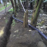 Irrigation Systems for Banana